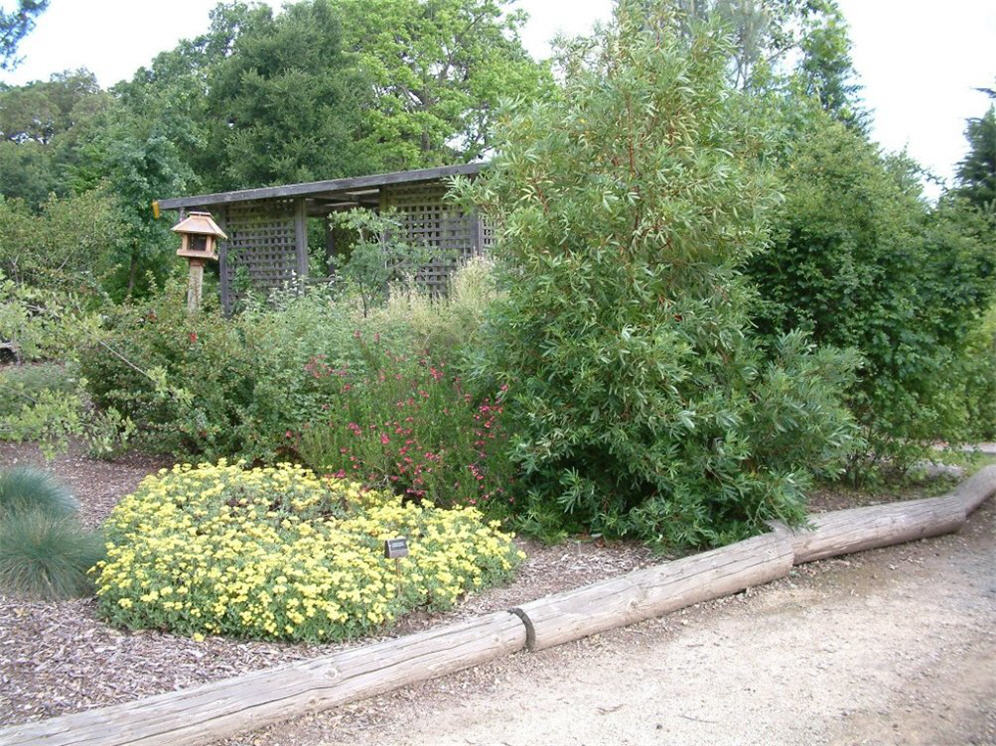 Native Plant Combinations